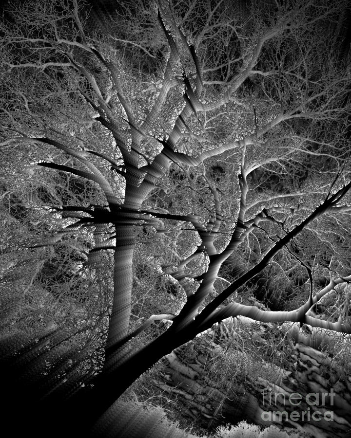 Tree Of Light 2 by Kathy M Krause