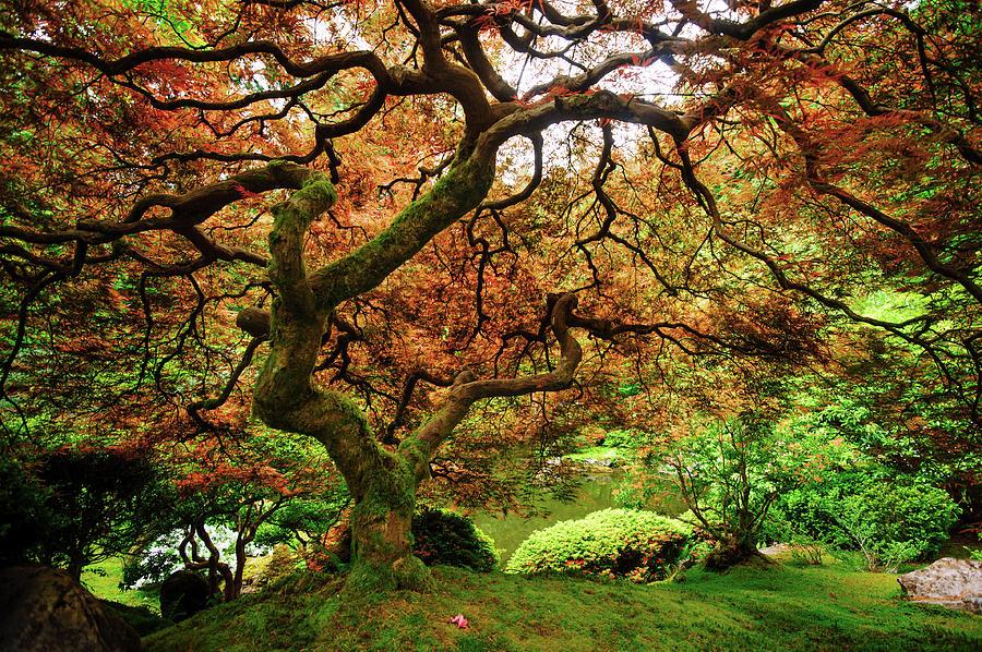 Tree Of Zen Photograph by Piriya Photography