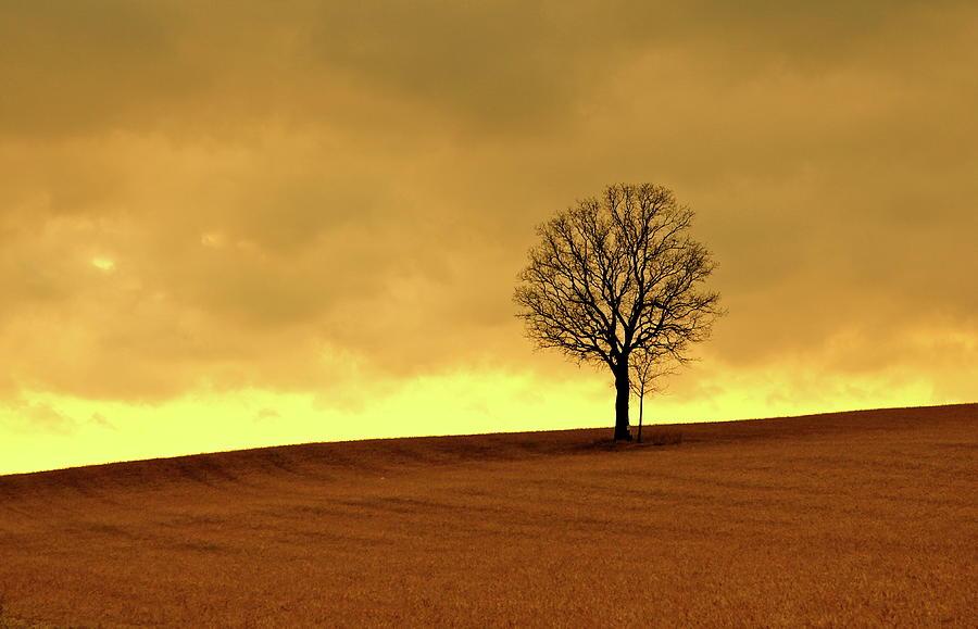 Tree On Hillside At Dusk  Sepia Photograph by Driftless Studio