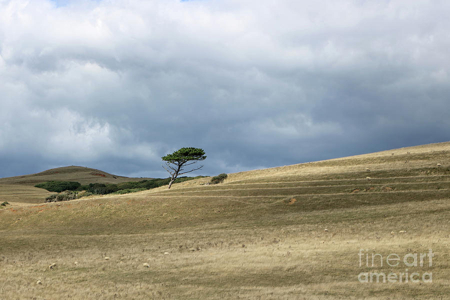 Tree on the Hill by Julia Gavin