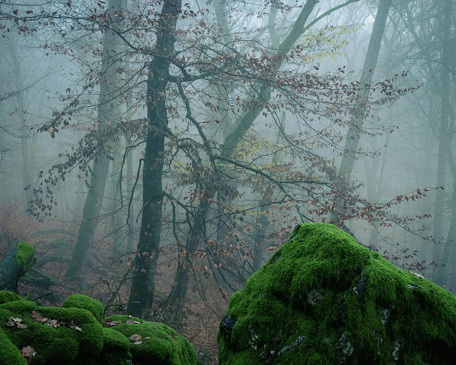 Tree on the rocks by Dalibor Hanzal
