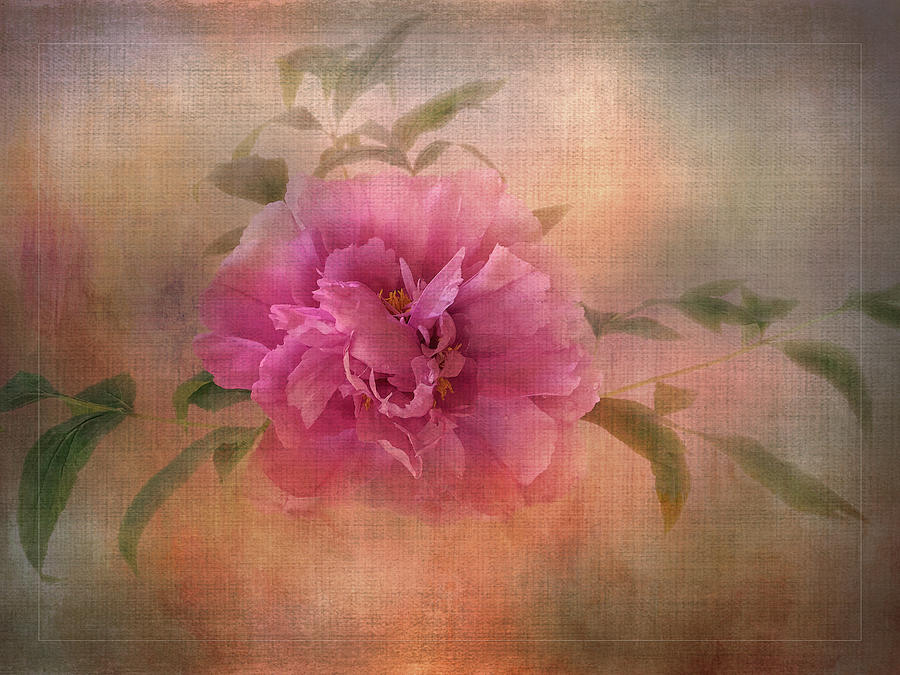 Tree Peony by Terry Davis