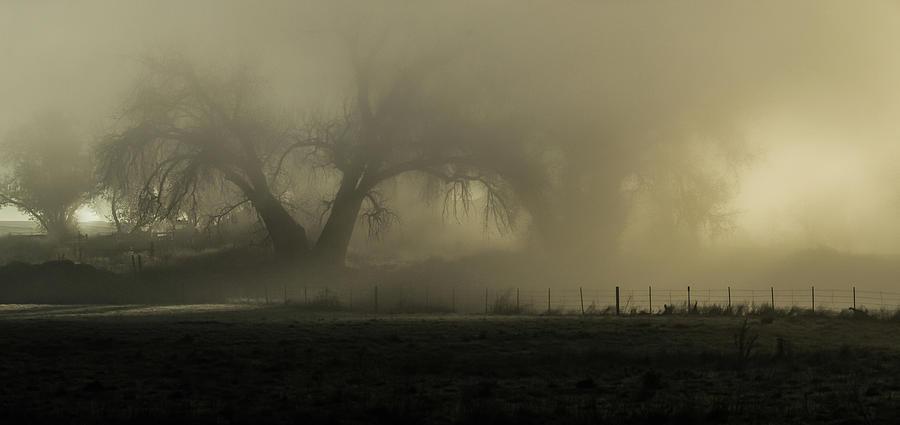 TREE by Rae Ann  M Garrett