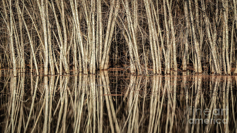 Tree Reflections by Craig Shaknis