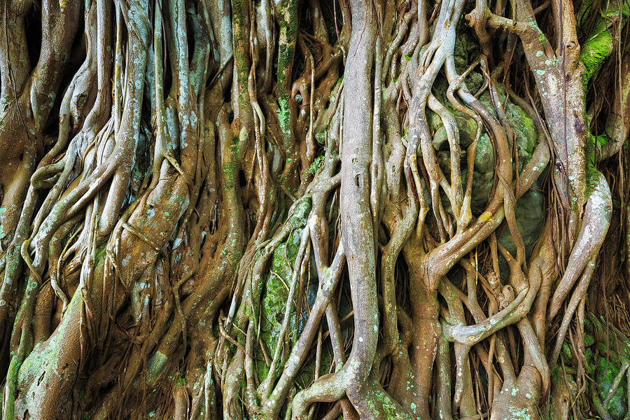 Abstract Photograph - Tree Roots, Onomea Bay, Hamakua Coast by Russ Bishop