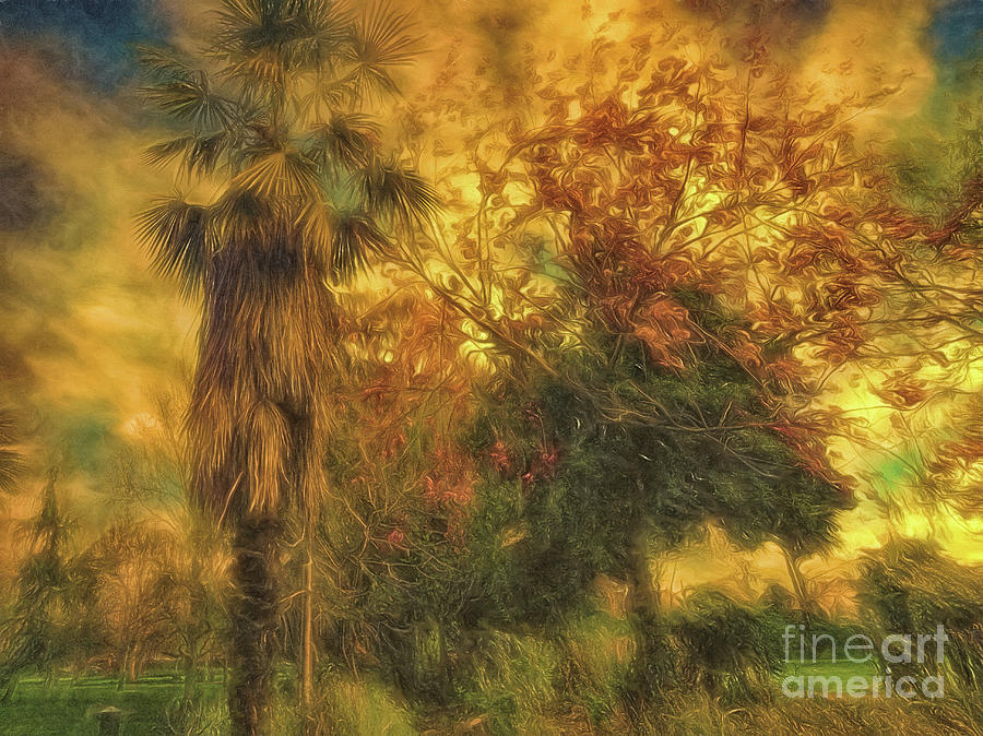 Trees Photograph - Tree Scene by Leigh Kemp
