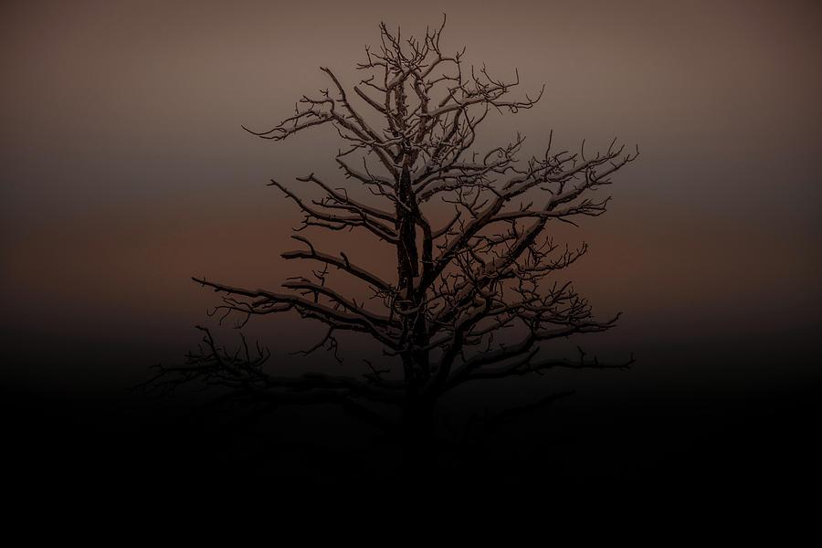 Tree Silhouette  by DHEERAJ MUTHA