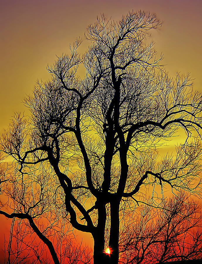 Tree Silhouetted at Sunset by Douglas J Fisher