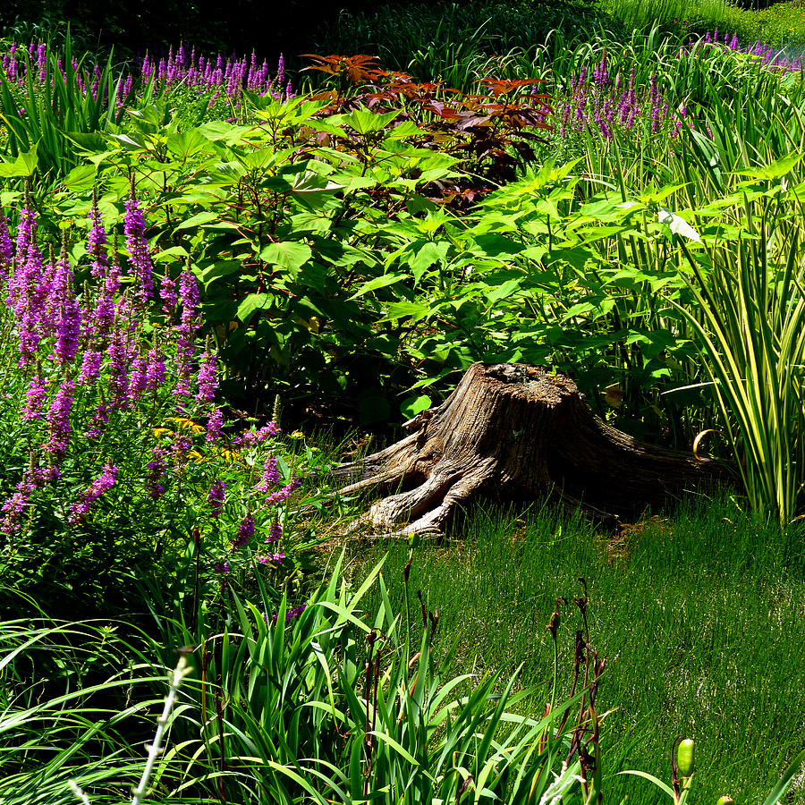 Tree Stump and Flowers Squared by Michael McBrayer