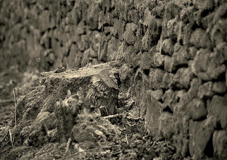 Tree stump Ashover by Jerry Daniel