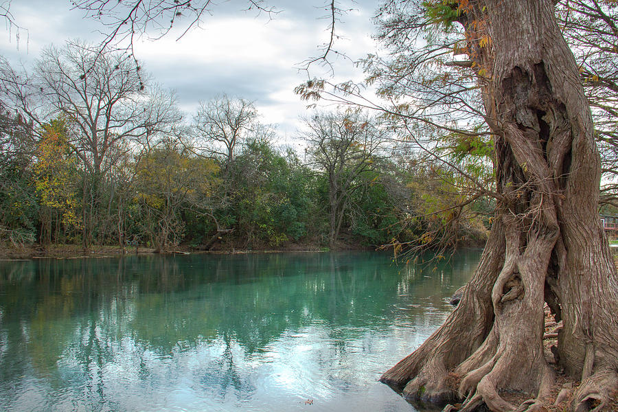 Tree Trunk and San Marcos River by Amy Sorvillo