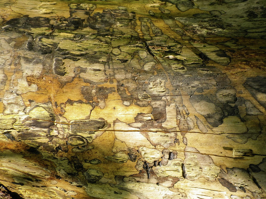 Tree Trunk Patterns In Dappled Light Abstract by Richard Brookes