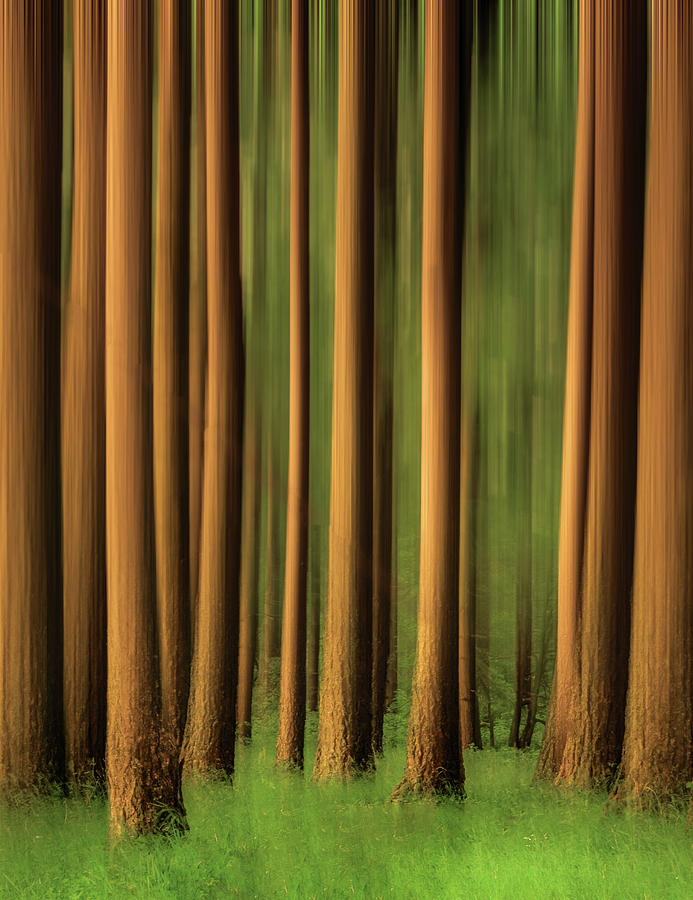 Tree Trunks to the Sky by Don Schwartz