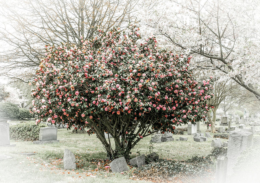 tree with in headstone by Rose
