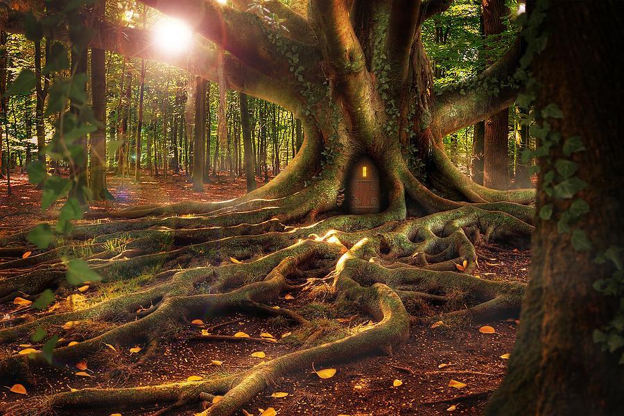 Treehouse by Carlene Smith