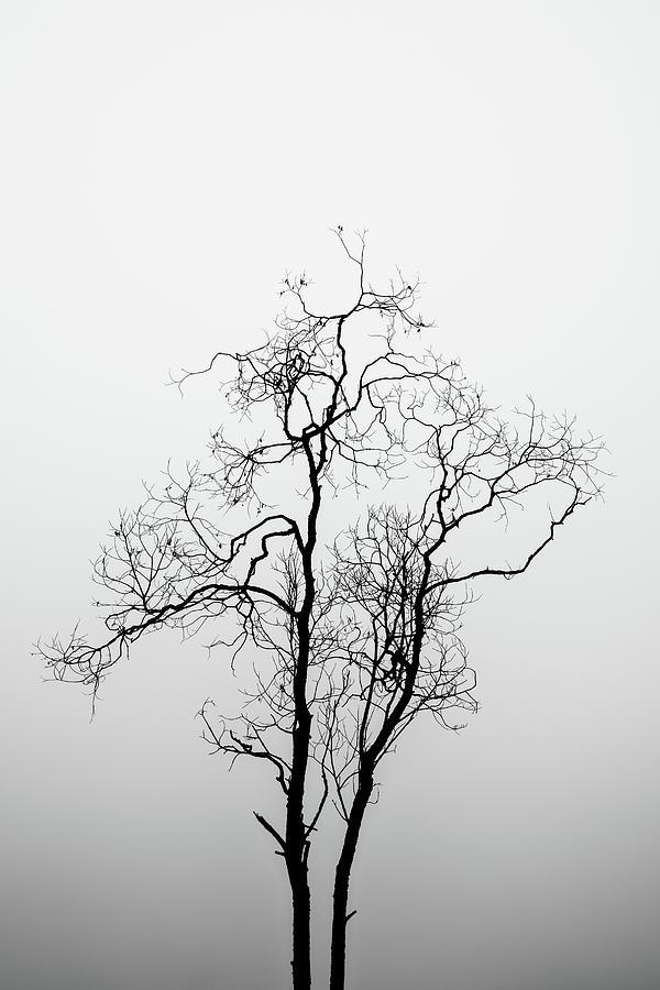 Treelhouette by George Grigoriadis