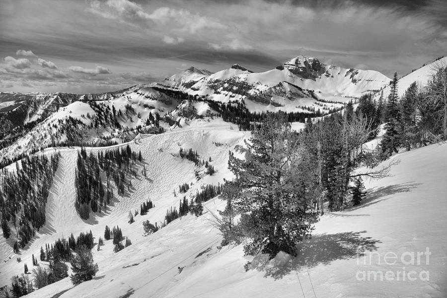 Trees Along The Ridgeline Black And White by Adam Jewell