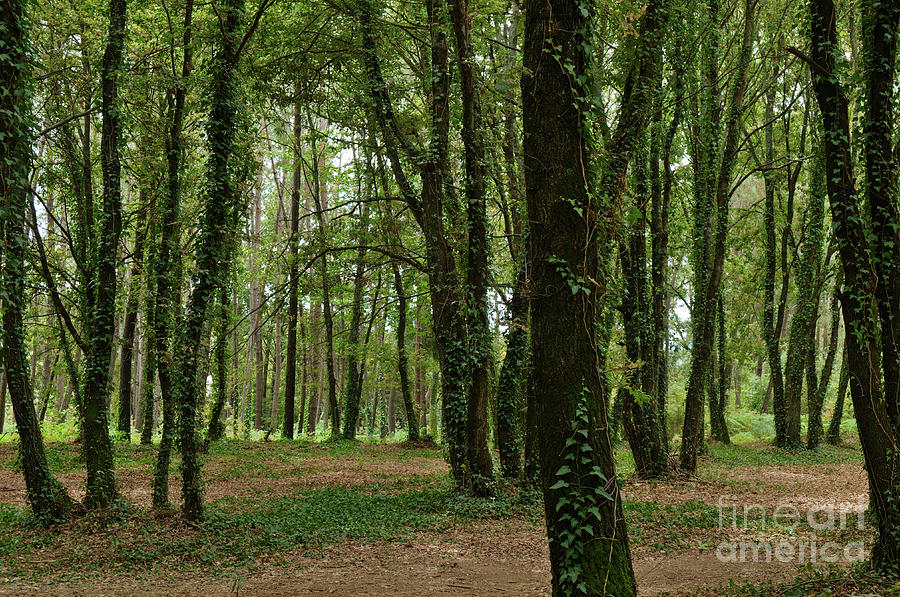Forest Photograph - Trees And Nature In Carvalhais 2 by Angelo DeVal