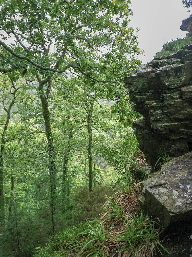 TREES AT CHIMNEY ROCK TAMAR VALLEY DEVON by Richard Brookes