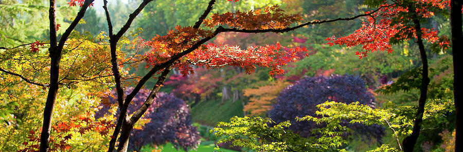 Horizontal Photograph - Trees In A Garden, Butchart Gardens by Panoramic Images
