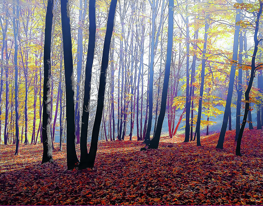 Trees in a misty autumn forest by Douglas J Fisher