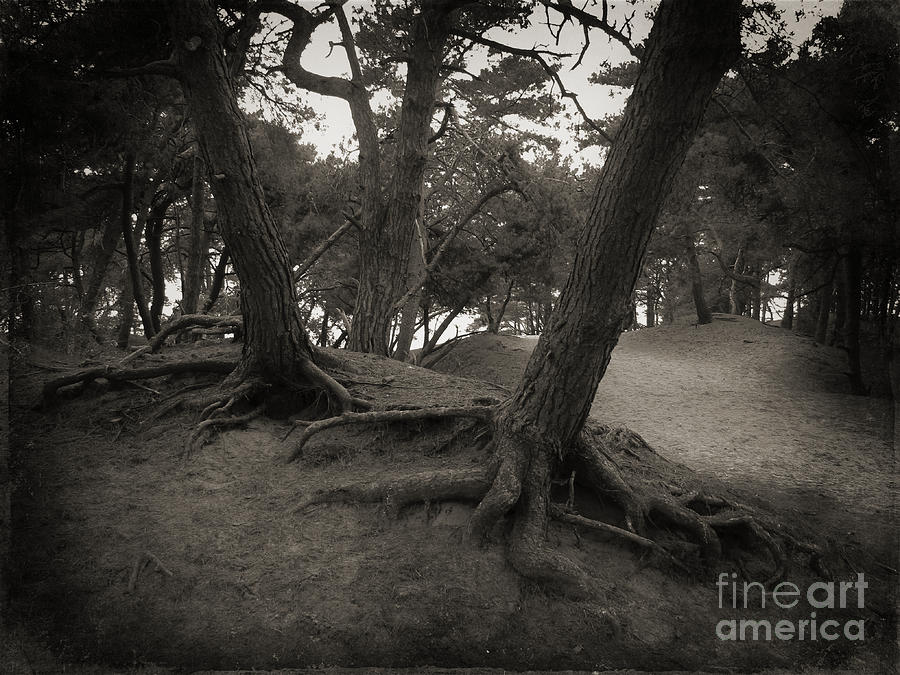 Trees in Black and White by Jurgen Huibers