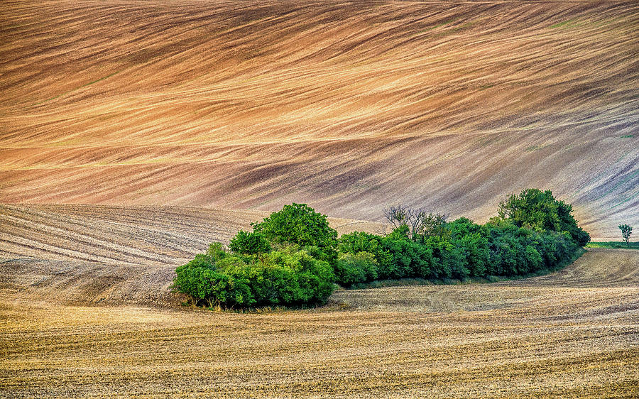 Czech Republic Photograph - Trees in Moravia by Andrei Dima