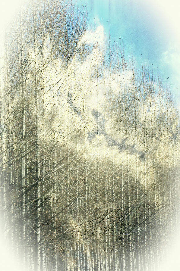 Trees in the Clouds by Tikvah's Hope
