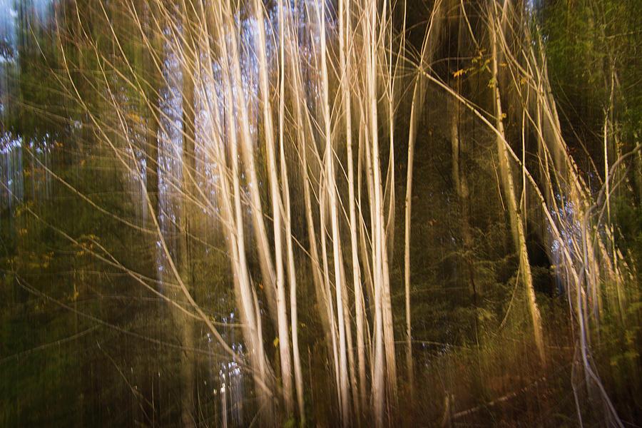 Trees in the fall by Yulia Kazansky