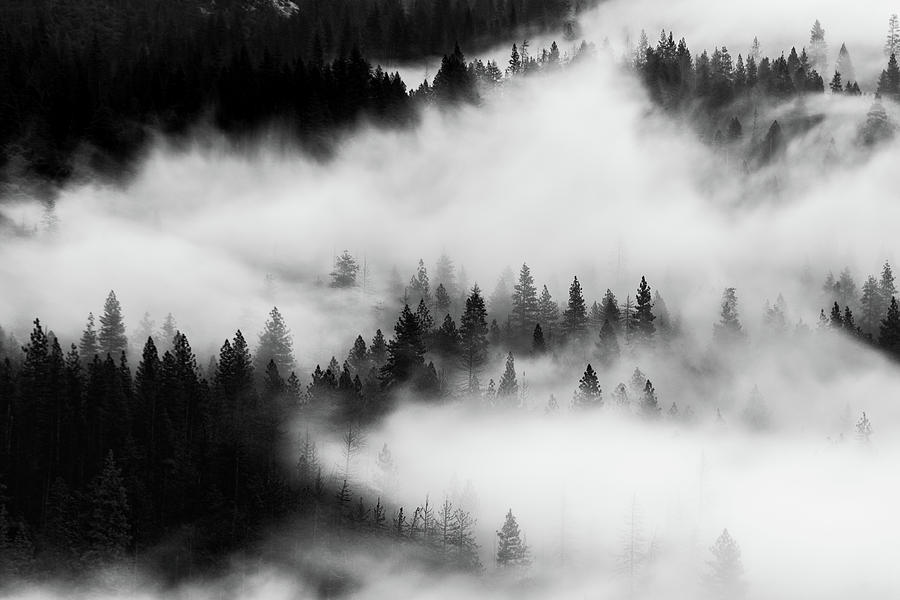 Trees in the mist 1 by Stephen Holst