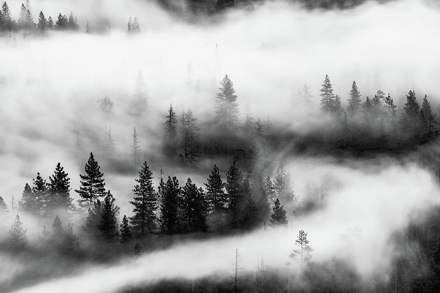 Trees in the mist 2 by Stephen Holst