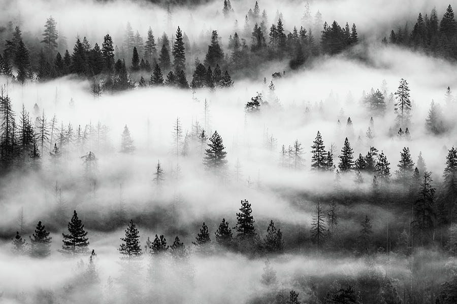 Trees in the mist 3 by Stephen Holst