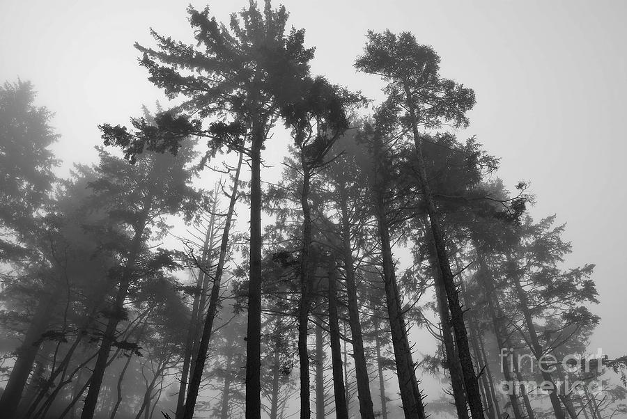 Trees Photograph - Trees In The Mist by Jeni Gray