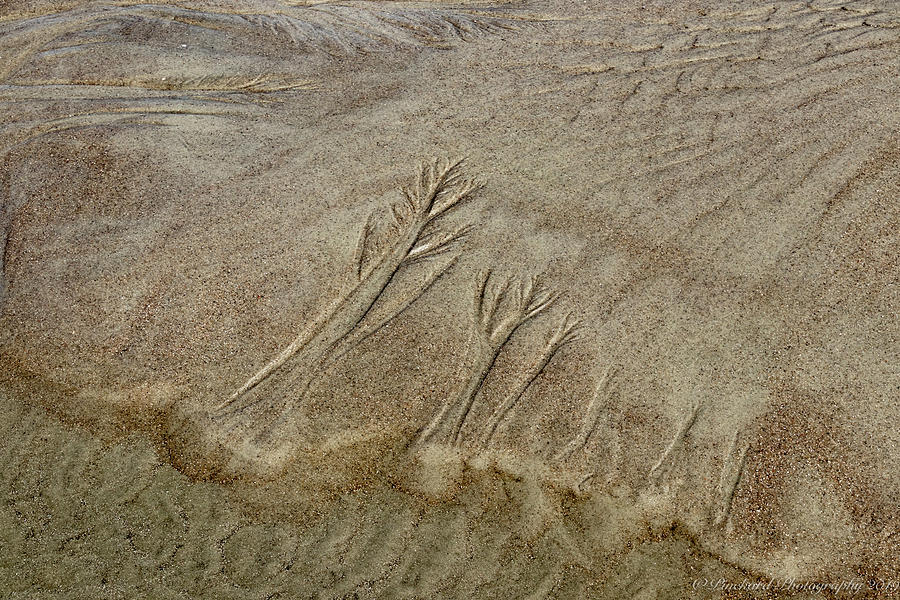 Trees in the sand by Timothy Pinckard