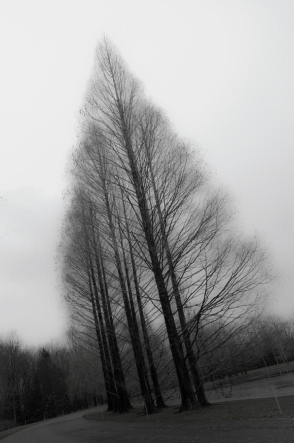 Trees In Winter Without Leaves Photograph by Marie Hickman