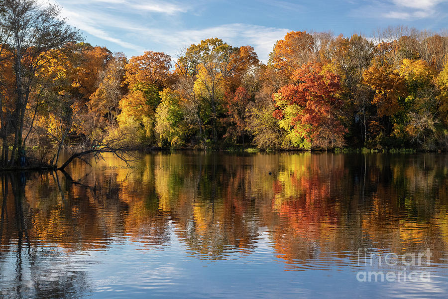 Autumn Photograph - Trees On Lake Carnegie by Nicki Hoffman