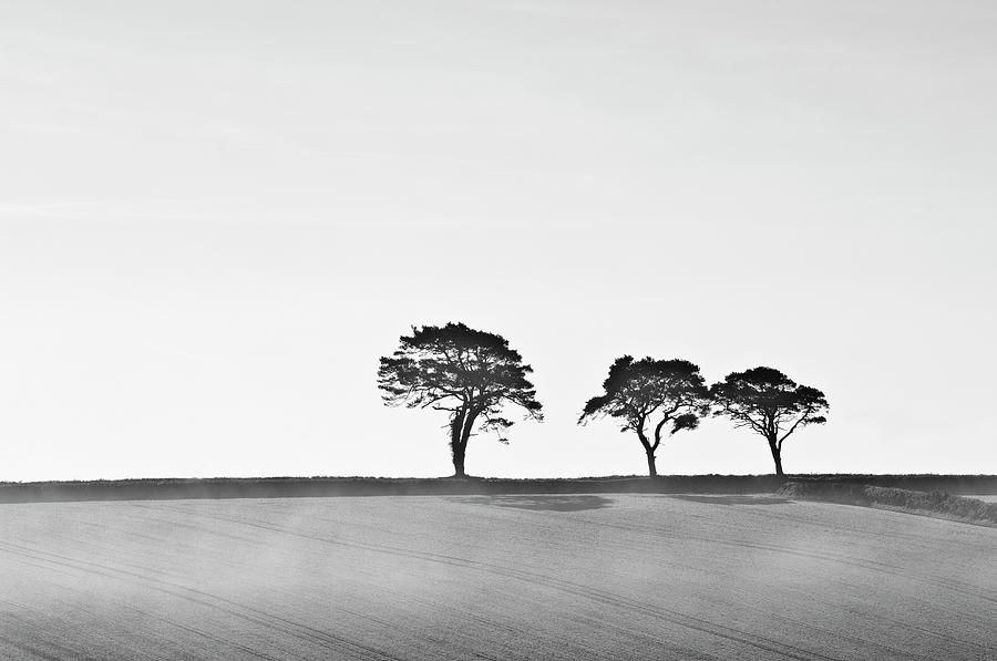 Trees On Skyline, Devon, Uk Photograph by Mike Hill
