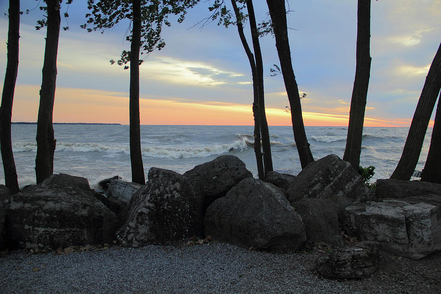 Lake Erie Photograph - Trees on the Shore by Angela Murdock