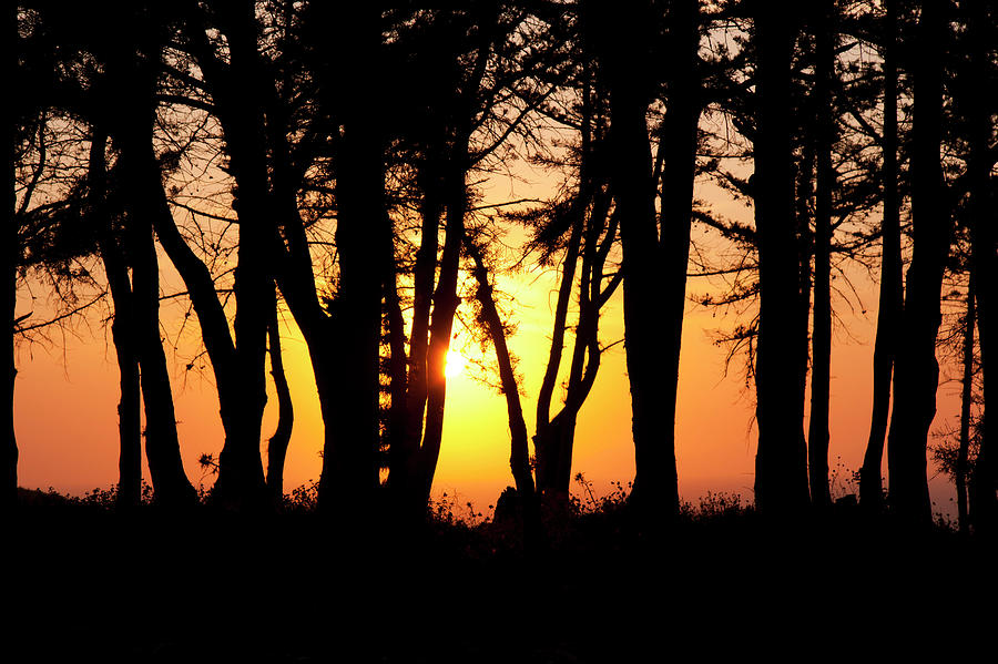 Trees sunset by Anna Kluba