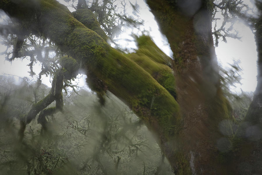 Trees Through Car Windshield In Rain Photograph by Diane Miller