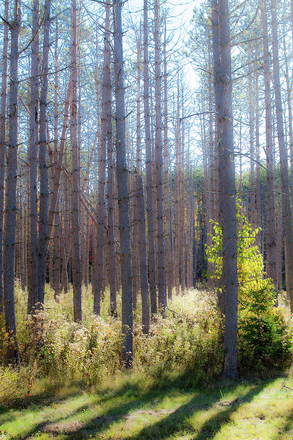 Trees Through the Forest by Steven David Roberts
