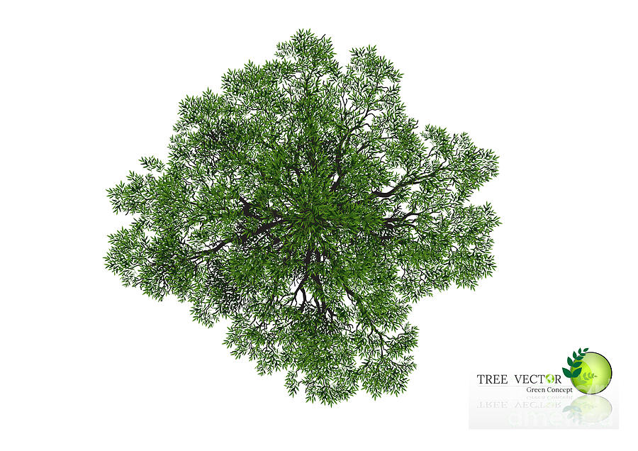 trees top view for landscape vector digital art by nikhomtreevector trees top view for landscape vector by nikhomtreevector