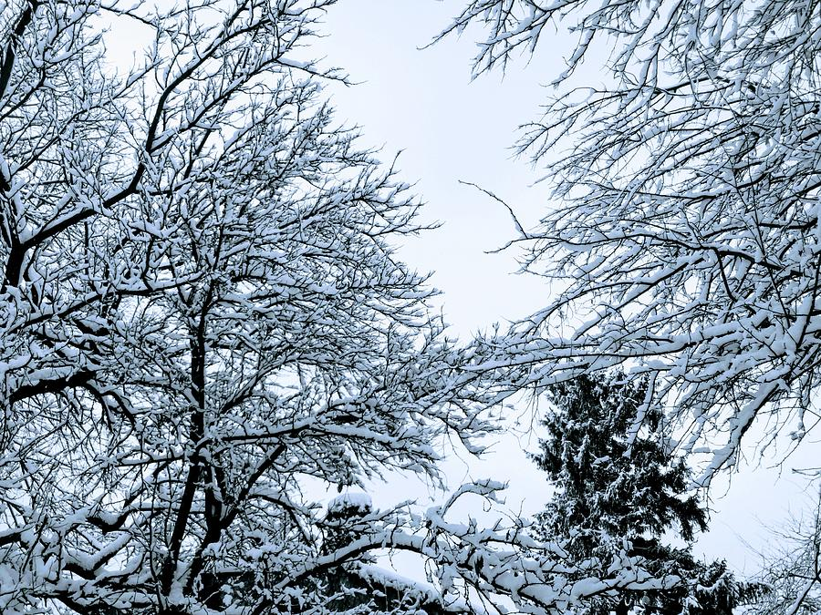 Trees Photograph - Trees With Snow by Chirila Corina