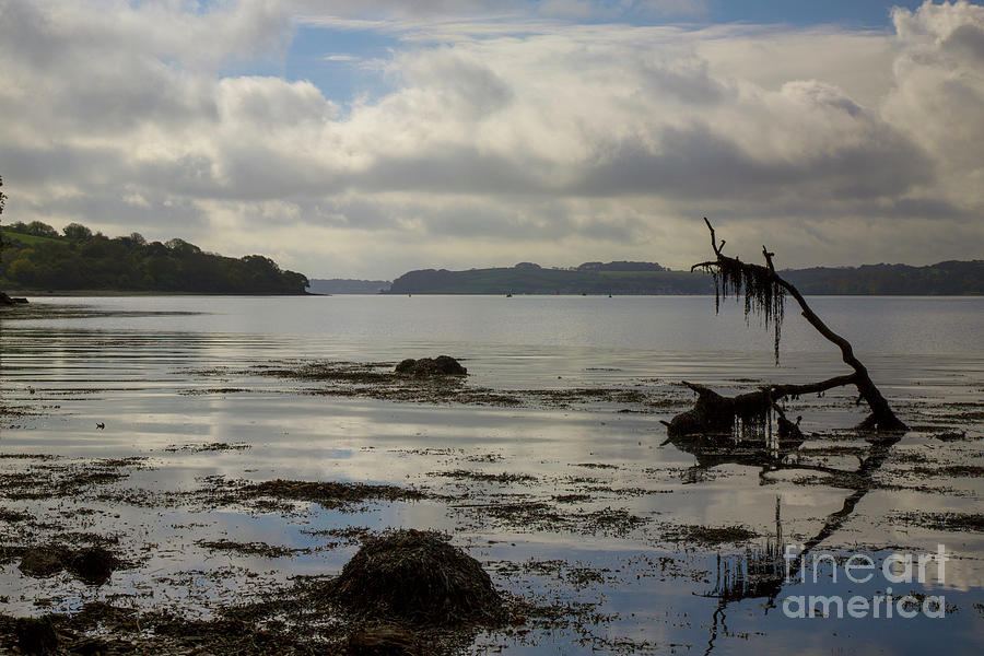 Trelissick Beach Dead Wood by Brian Roscorla