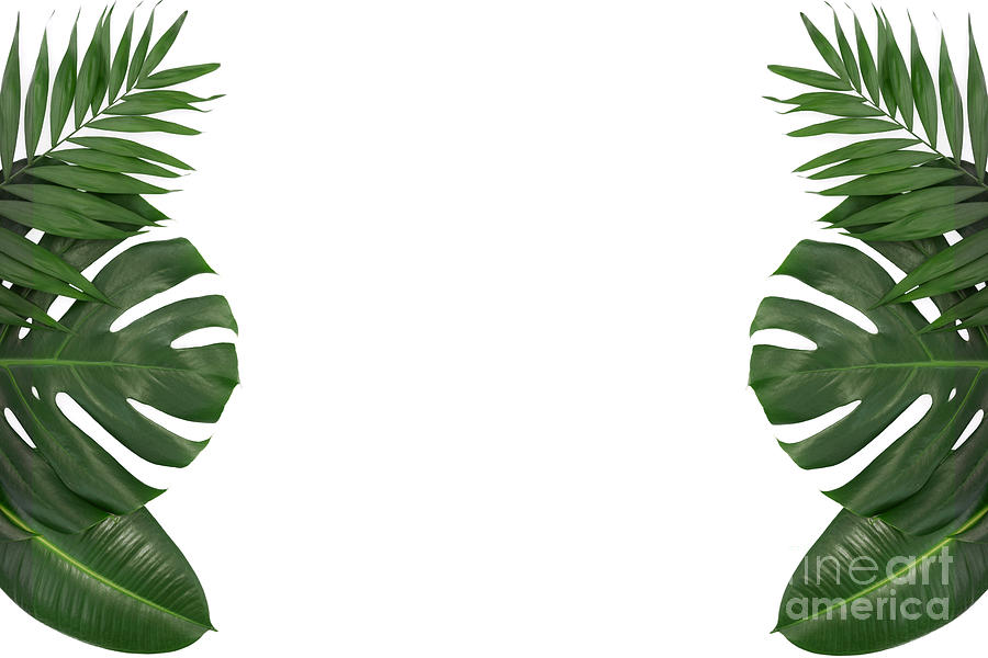 Trendy Tropical Leaves Template Photograph By Wdnet Studio Or plants and lighting effect on white paper background. trendy tropical leaves template by wdnet studio