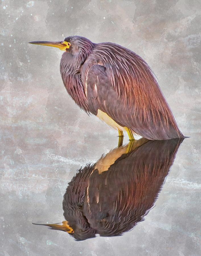 Tri-Color Heron by Steve DaPonte