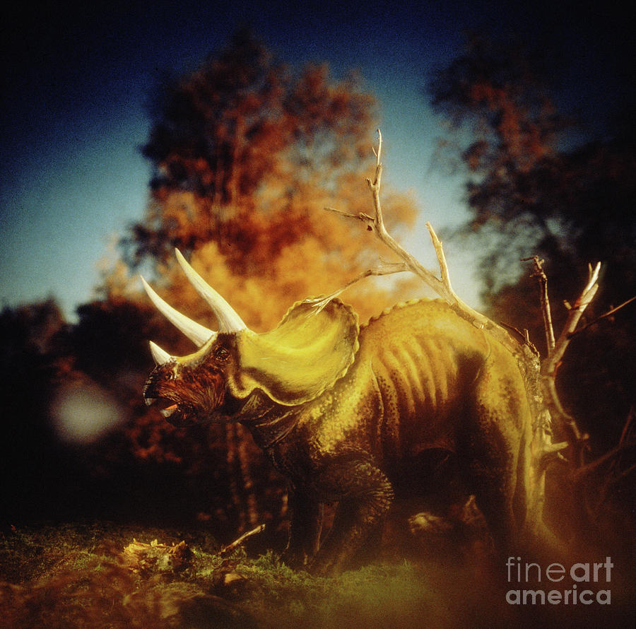 Triceratops by Warren Photographic