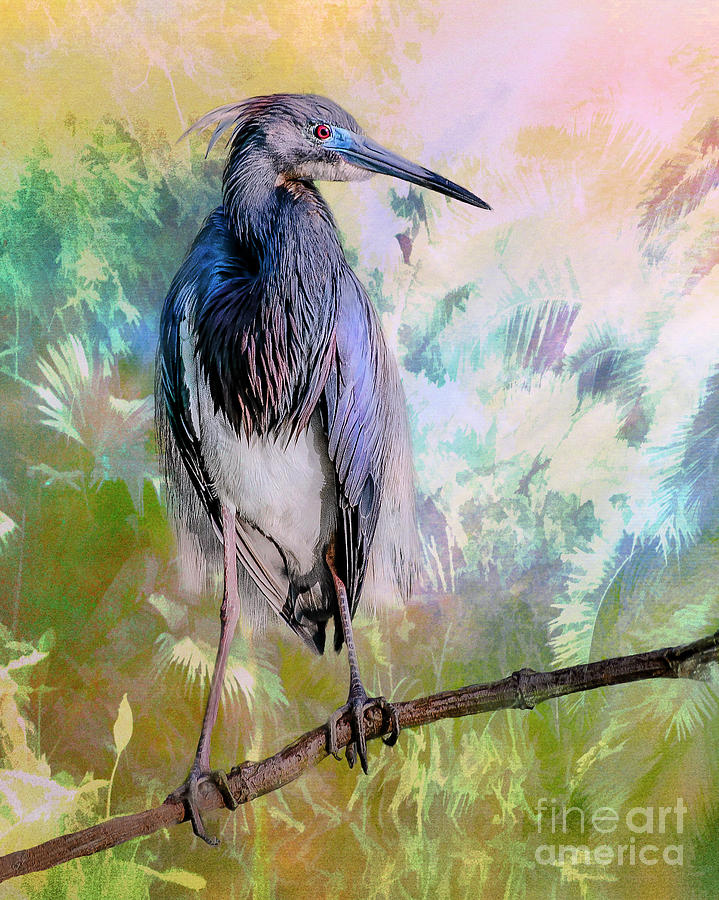Tricolored Heron by Brian Tarr