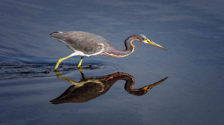 Tricolored Reflection by Van Sutherland