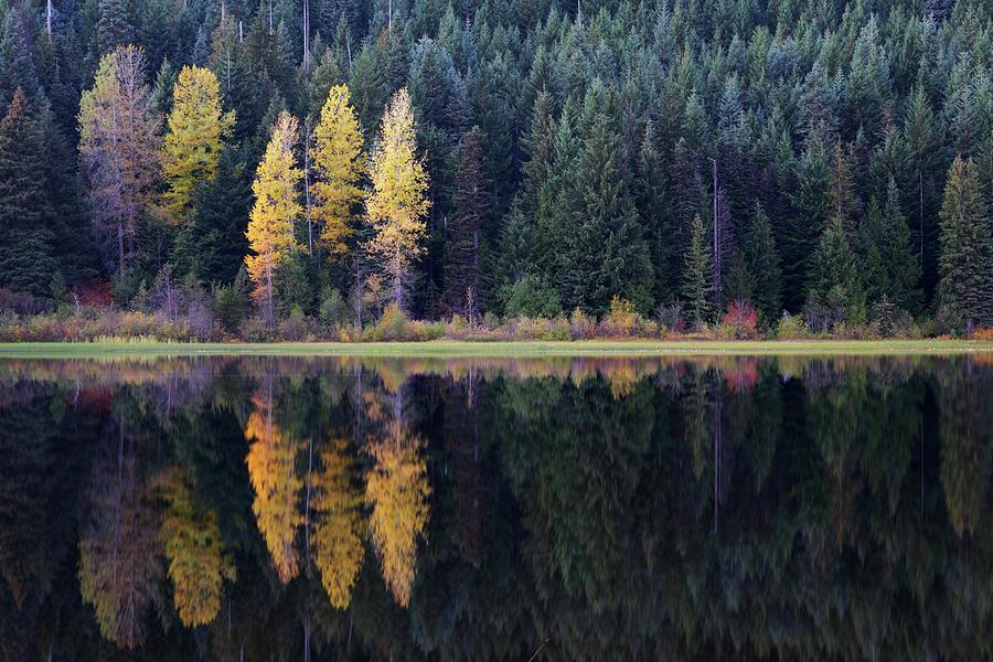 Trillium Lake Oregon Photograph by Davealan